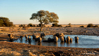 Elephants at the water hole - Loxodonta africana