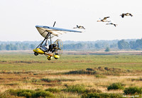 Operation Migration, Whooping Cranes