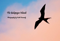 Great Frigate Bird, San Cristobal Island