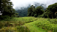 Pipeline Trail / Cloud Forest