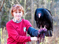 """Tallulah"", Turkey Vulture, Schlitz Audubon Nature Center (captive animal)"